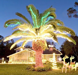 x - Palm Tree With Christmas Lights