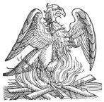 phoenixlinedrawing