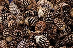 pinecones3