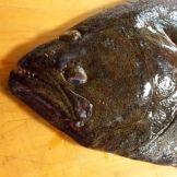 flounder6