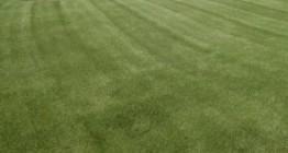 grasss3
